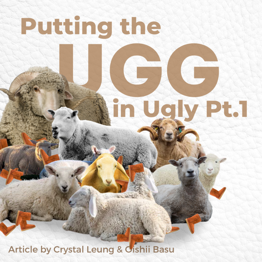 uggs+on+sheep