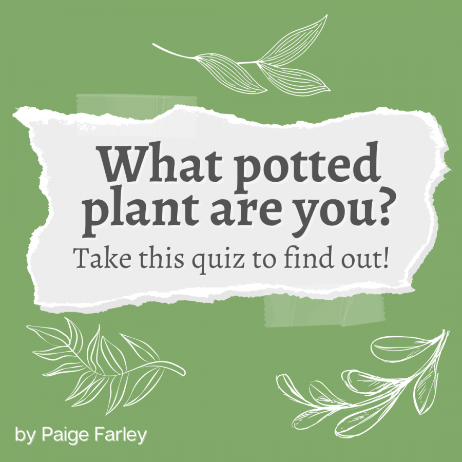 What Potted Plant Are You?