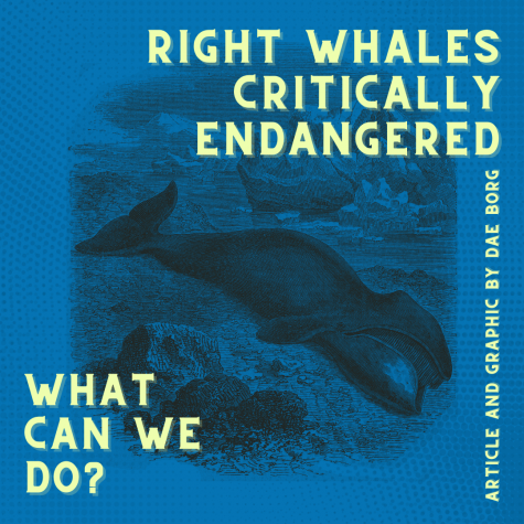 Right Whales Critically Endangered: What Can We Do?
